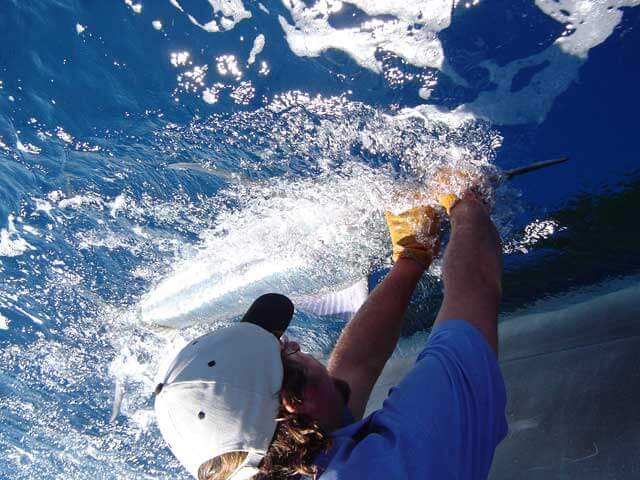 Deep Sea Fishing Charters - Gold Coast - Big-game fishing